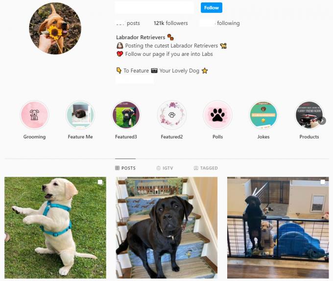 120K Labrador Retrievers Dogs Instagram Account for Sale