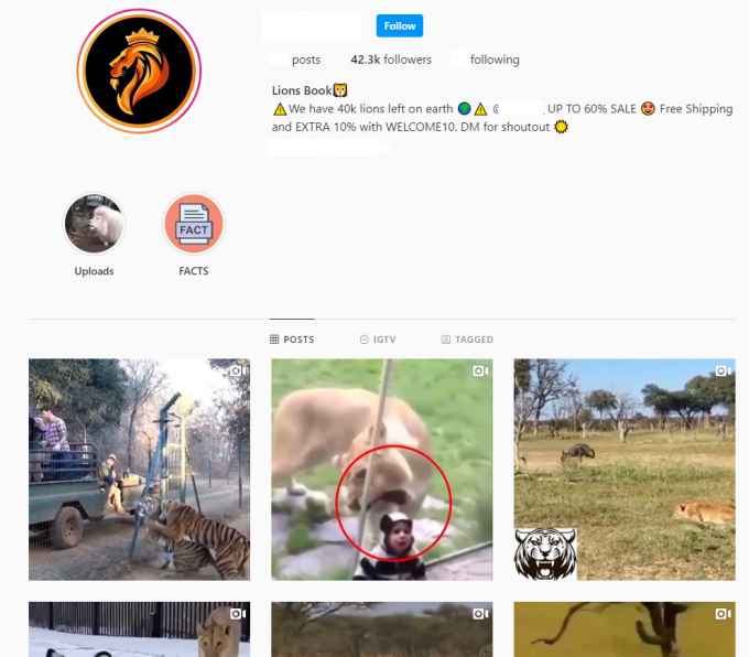 40K Animals Instagram Account for Sale