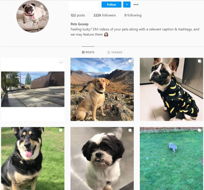 220K Pets Instagram Account for Sale