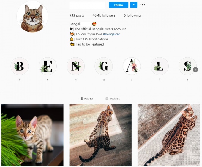 45K Bengal Cats Instagram Account for Sale