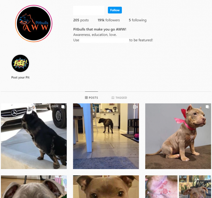 190K Pitbulls Instagram Account for Sale