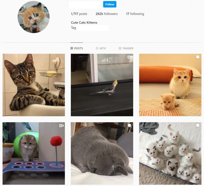 280K Animals Cats Instagram Account for Sale