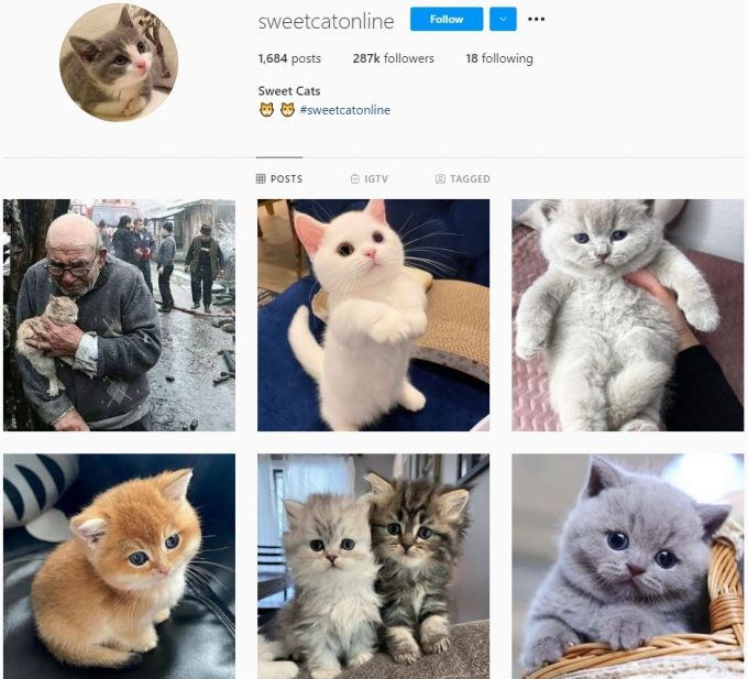 280K Pets Cats Instagram Account for Sale