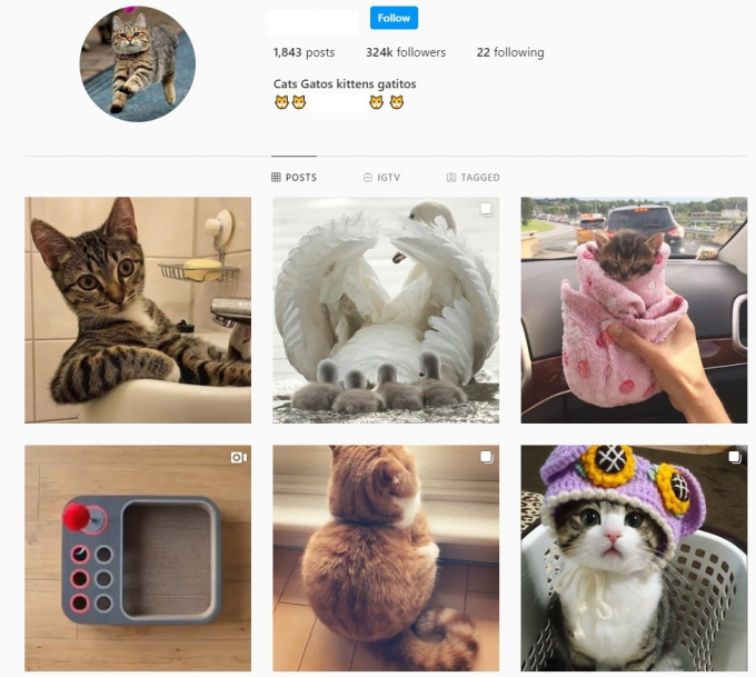 320K Cats Pets Instagram Account for Sale
