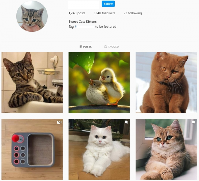 330K Sweet Cats Instagram Account for Sale