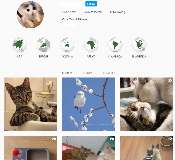 350K Cute Cats Instagram Account for Sale
