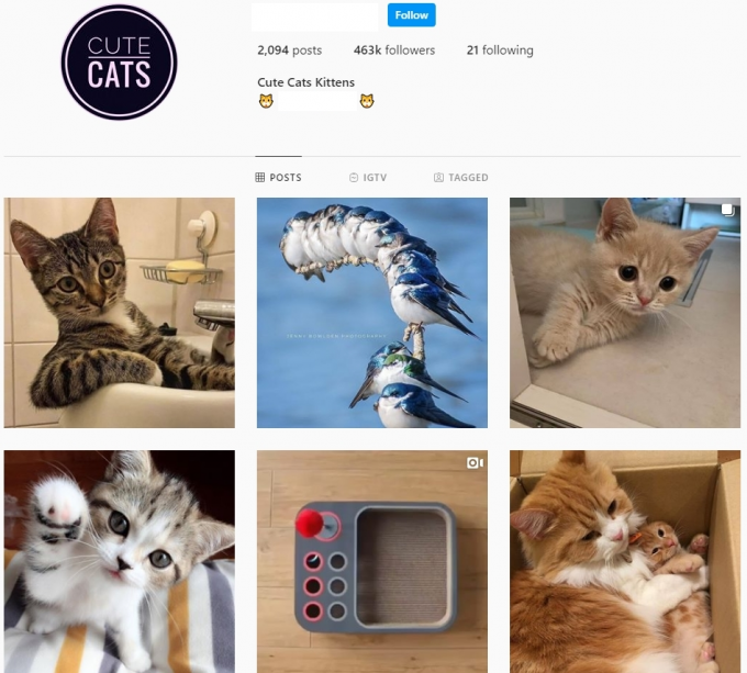 460K Animal Cats Instagram account for Sale