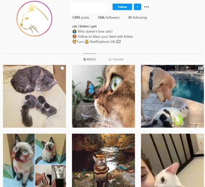 130K Pets Cats Instagram Account for Sale