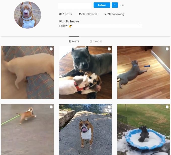 150K Pitbulls Dogs Instagram Account for Sale