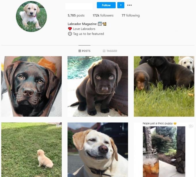 170K Labrador Dogs Instagram Account for Sale