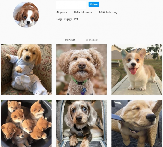 10K Cute Dogs Instagram Account for Sale