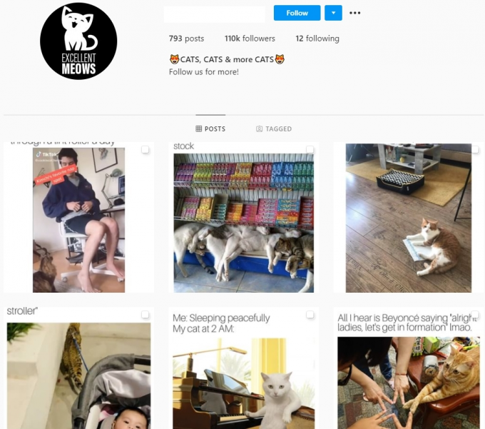 110K Kittens Cats Instagram Accounts for Sale