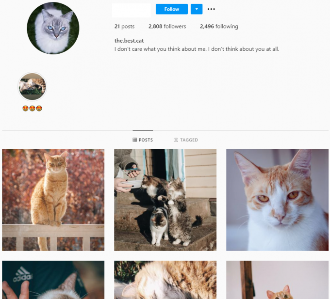2K Cats Instagram Account for Sale