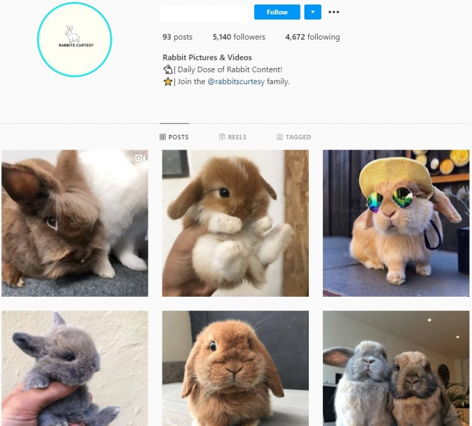 5K Rabits Instagram Account for Sale
