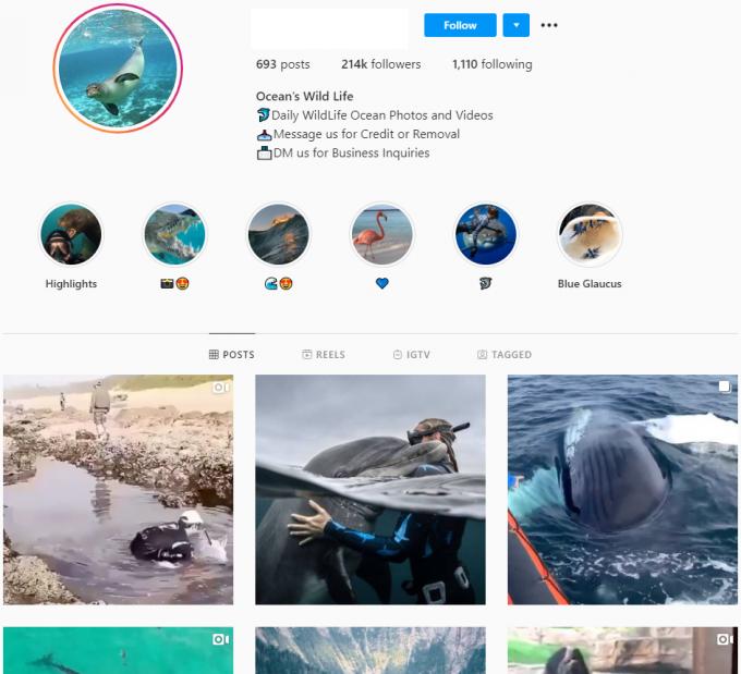 214K Ocean Wilf Life Instagram Account for Sale