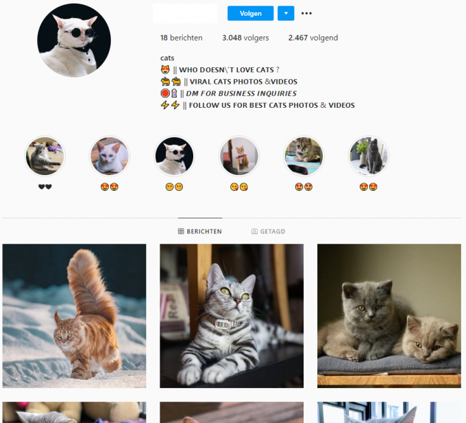 3k Viral Cats Instagram Account for Sale