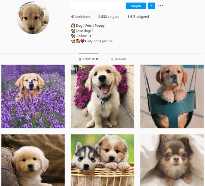 4.8K Puppies Dogs Instagram Account for Sale