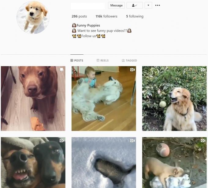 110K Puppies Pets Instagram Account for Sale