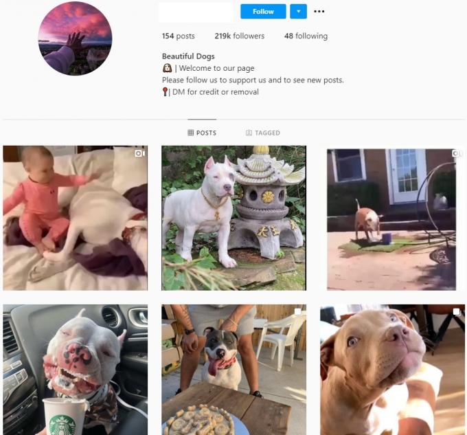 210K Pitbull Dogs Instagram Account for Sale