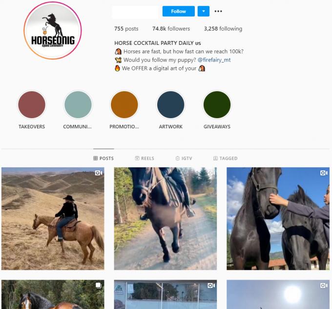 70K Animal Horse Instagram Account for Sale