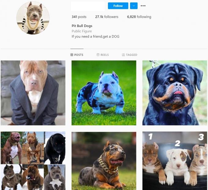 25K Pitbull Dogs Instagram Account for Sale