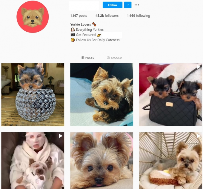 45K Yorkshire Dogs Instagram Account for Sale