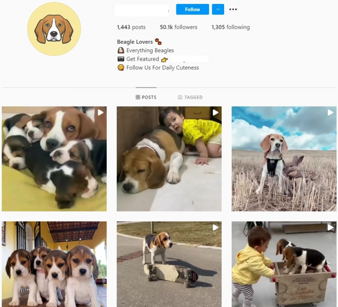 50K Beagle Dogs Instagram Account for Sale
