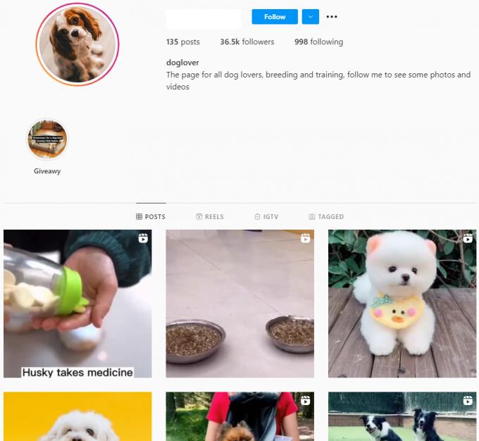 35K Dog Lover Instagram Account for Sale
